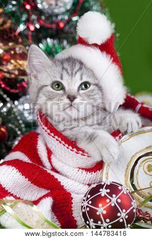 christmas kitten in santa claus hat