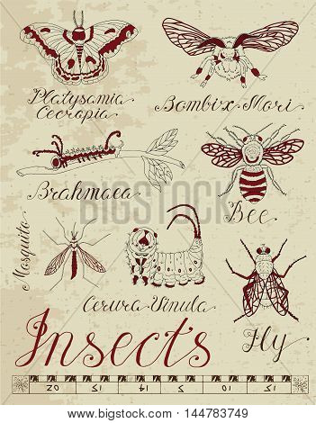 Graphic set with insects and calligraphic lettering on paper texture background. Doodle line art illustration and hand drawn sketch, entomologic collection with fly, bee, moth, mosquito