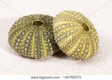 Sea shells of green sea urchin on sand
