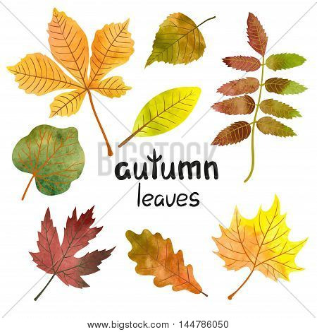 Watercolor autumn leaves set. Vector collection of colorful maple, oak, rowan, poplar, chestnut leaves.