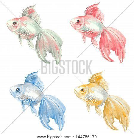 Fish set. Goldfish. Watercolor painting. Raster illustration