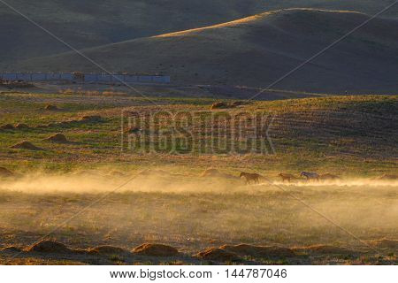 Steppe.Sunset. Caravan of horses.Kazakhstan.Fauna of steppes and semi-deserts of Central Asia.