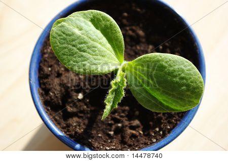 Plant: New Life