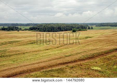 Lithuanian Wheat Field