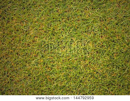 grass texture Golf Course for design pattern and background.