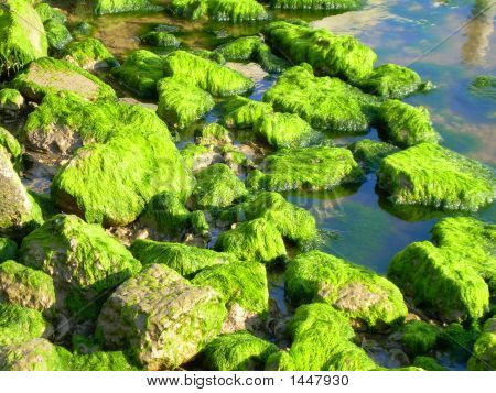 Green Algae On Rocks