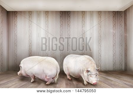 Two Pigs In The Room.