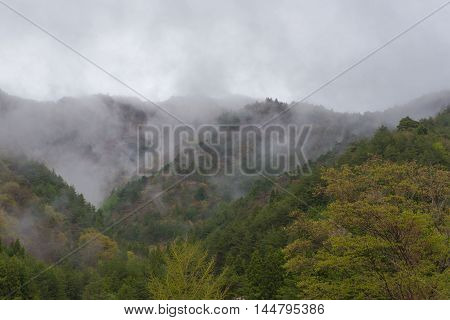 trees in a fog on the mountain , Background