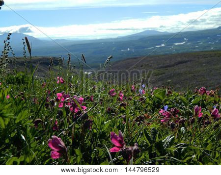Summer Meadow With Pink Flowers In Sunny Weather