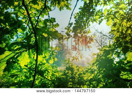 Summer background with tree leaves