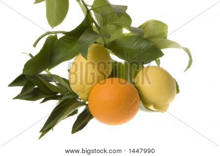 Orange In With Lemons