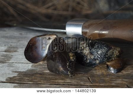 mussels and a hunting knife on a wooden background