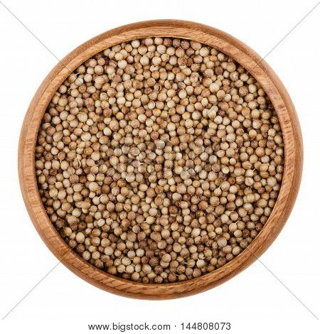 Dried coriander seeds in a wooden bowl on white background. Edible brown fruits of Coriandrum sativum, also cilantro or Chinese parsley, used as a spice in food preparation. Isolated macro close up.