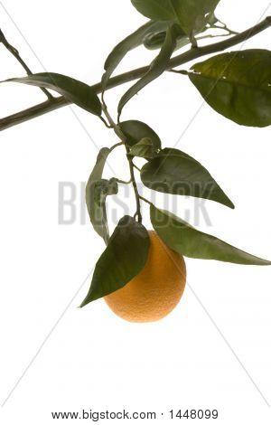 vertical framed orange hanging from