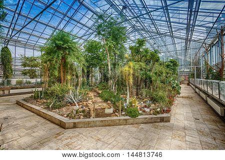 Palm trees in glasshouse botanical garden, indoor