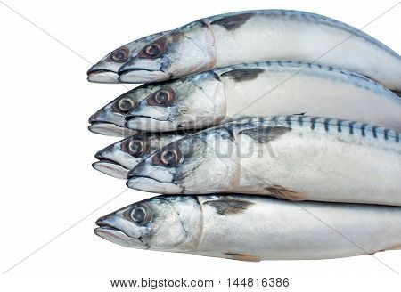 Seven of raw fresh mackerel lie on each other on a white isolated background closeup.