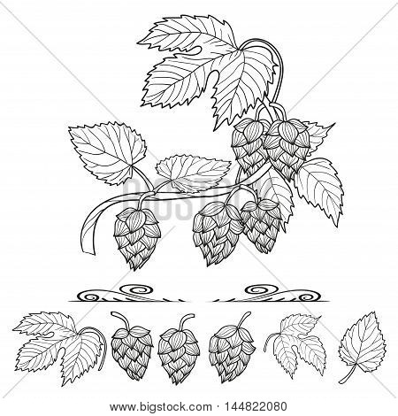 Hops set. Collection of hop decorative elements, leaves and cones, for your design. Sketch vector illustration.