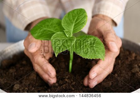 Old man hands with plant in a ground