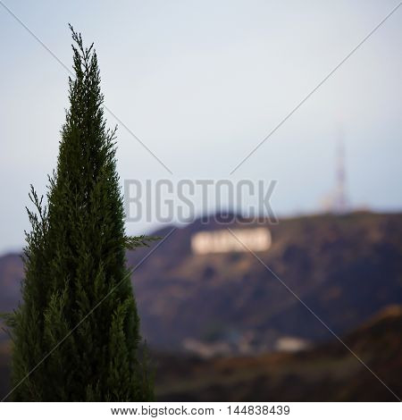An amazing Place in Los angels , California on the top of the mountain front of  Hollywood sign behind the tree