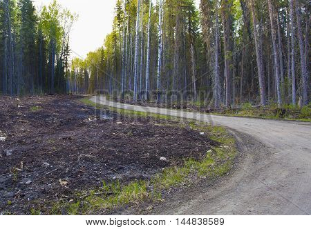 Dirt road in the thick forest in Saskatchewan Canada