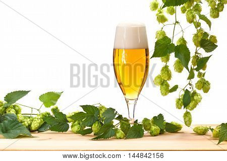 glass of beer with hop on the white background
