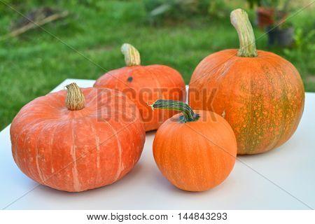 Pumpkins different varieties harvest in the garden