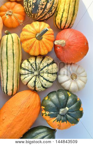 Pumpkins and squashes autumn vegetables varieties top view