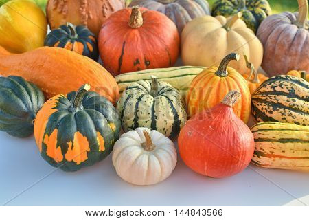 Winter squash collection. Autumn decoration in daylight