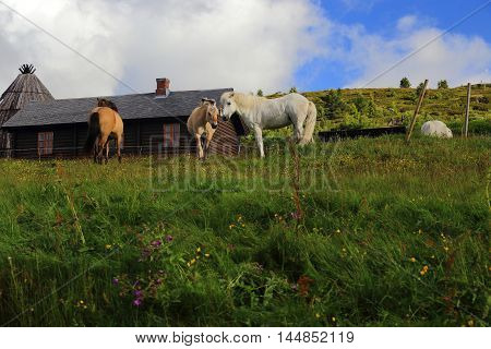 This is rural scene grazing horses on the outskirts of the village in a fenced corral.