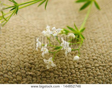 White flowers on the fabric autumn bloom nature garden bud petals color white green flora floristics botany plant macro closeup