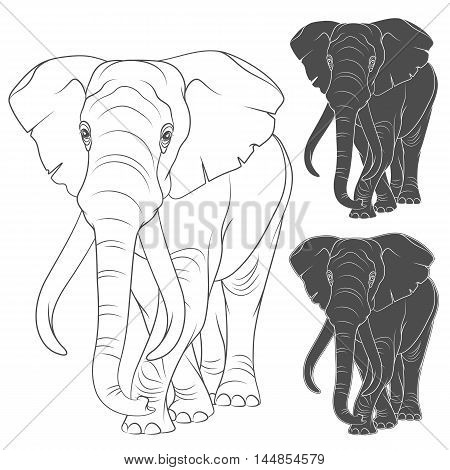 Set of vector illustrations with the elephant. Isolated objects on a white background.