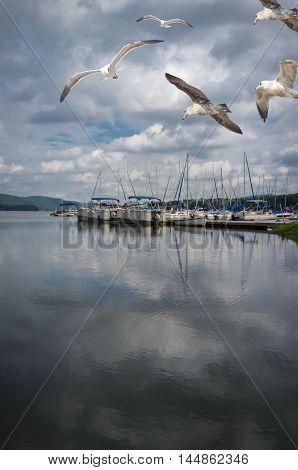 Summer lake marina with several flying seagulls