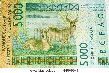 5000 CFA franc bank note. CFA franc is used in 14 African countries.
