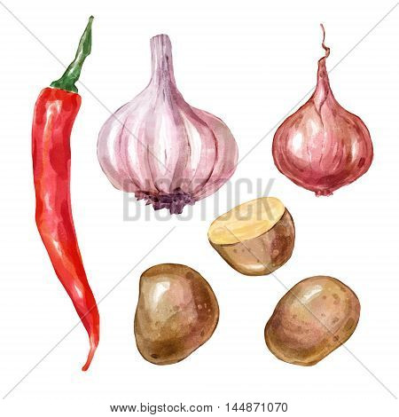Watercolor vegetables garlic potato onion pepper . Big collection of hand drawn illustrations. Good for book illustration, magazine or journal article.
