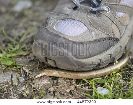 Human foot wearing sport shoes about to step on a snake macro outdoor shot