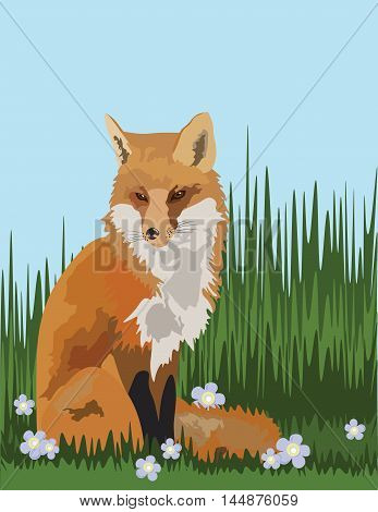 Fox in the field of grass Vector illustration