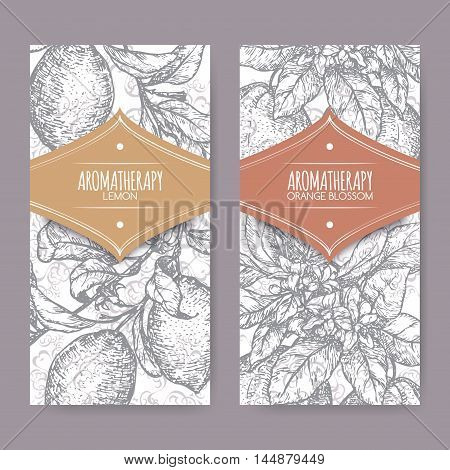 Set of two labels with Orange blossom and lemon branch sketch on elegant lace background. Aromatherapy series. Great for traditional medicine, perfume design, cooking or gardening.