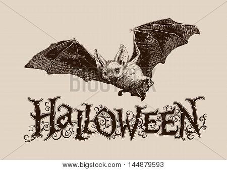 Vintage halloween celebration graphics flying bat horizontal for poster banner header mail invitation