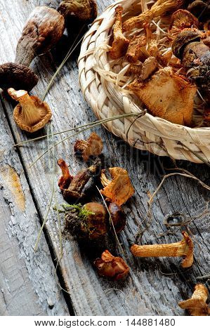 Forest Dried Mushrooms with Chanterelles Porcini Boletus Mushrooms and Dry Stems closeup Rustic Wooden background. Top View