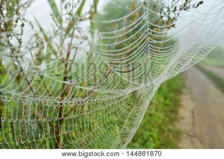 The spider web closeup background with grass