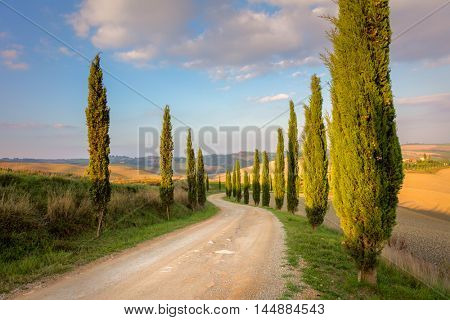 Cypresses Trees and ground road,  morning sky  - real nature, Tuscany rural landscape, Italy, Europe