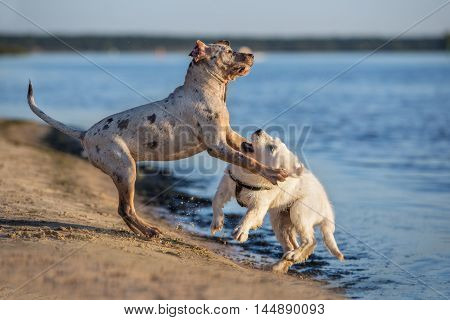 two puppies playing together on the beach