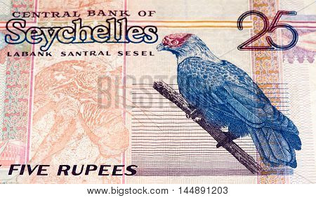 25 Seychellois rupee bank note, the national currency of Seychelles