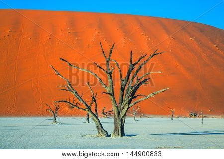 Ecotourism in Namib-Naukluft National Park, Namibia. Dried lake Deadvlei, with dry trees. Evening, sunset