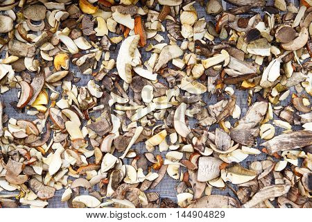 Background Of Mixed  Sliced Forest Mushrooms Drying On A Mesh.