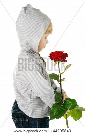 little beautiful boy with rose isolated on white