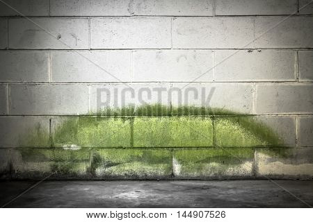 Mold on the wall of an underground. The stain seems to have the shape of a crocodile.