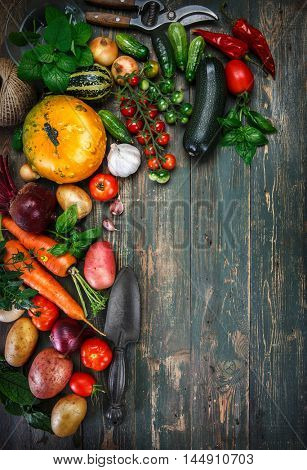 Harvest fresh vegetables on old wooden board top view rustic style autumn still life gardening copyspace