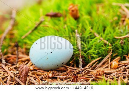 Closeup Of Blue Blackbird Egg