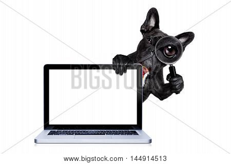 Magnifying Glass Dog